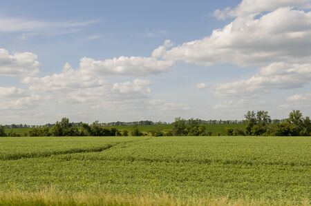 The field with trees far away. Cultivated area. Agriculture. Bright blue sky and green grass 版權商用圖片