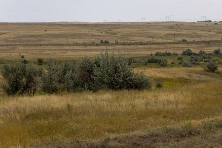 Gold meadow with clear blue sky and clear blue sky above. Yellow dry grass. Electric poles in the field. Traveling. Ural landscapes