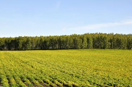 Green summer landscape with mountains and cultivated area Standard-Bild