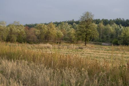 Hayfield Meadow in the early autumn. Dry plants around. Green trees far away. Dark heaven with white clouuds above