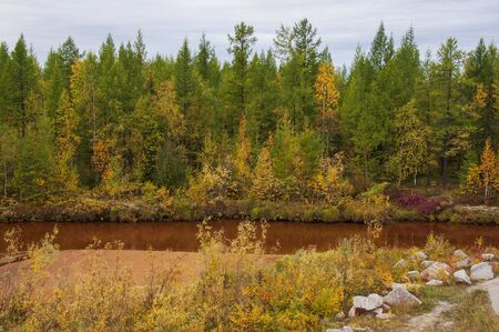 Brown river slow flowing across the green and yellow forest with reflections of pines and trees in the water. Autumn on the north with blue sky above