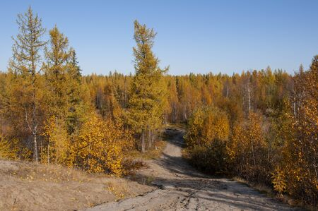 Autumn soft lands?ape with forest in green, yellow and brown colors. Trees of birch, larch, spruce, fir, pine and cedar. Gold autumn wood Stock fotó