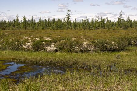 Swamp in the green meadow and forest far away. Marsh, bog, morass, fen, backwater, mire, slough ... Summer Stock fotó