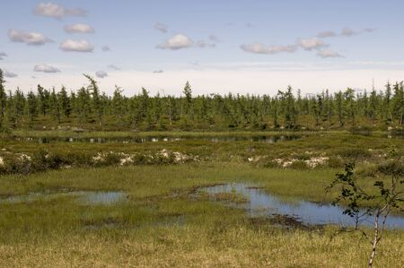 Swamp in the green meadow and forest far away. Marsh, bog, morass, fen, backwater, mire, slough ... Summer Stock Photo