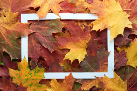 White frame on colorful autumn leaves background. Autumn, fall, thanksgiving day, nature concept. Flat lay, top view, copy space. Archivio Fotografico