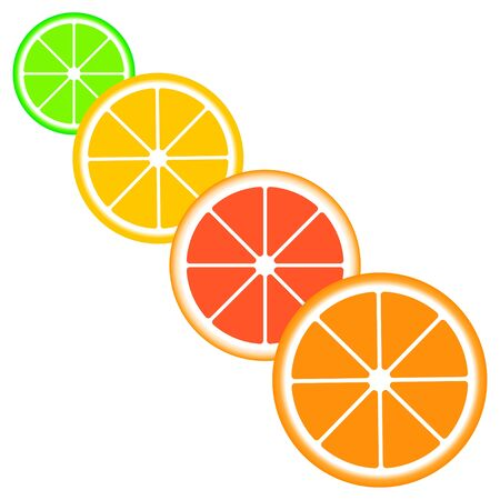 Citrus slices of lemon, orange, lime and grapefruit. Çizim