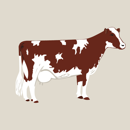 Cow on a grey background