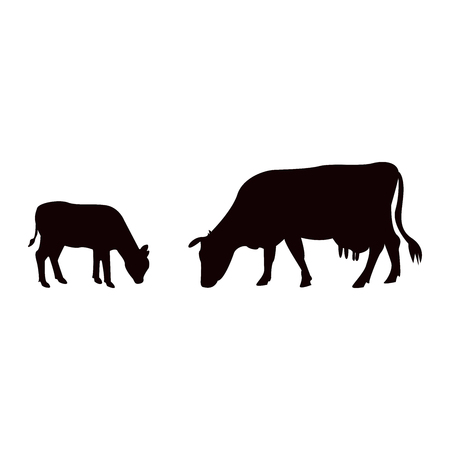 Silhouettes of caw and baby cow in isolated on white