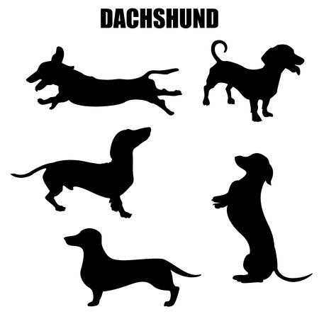 Iconos y siluetas de vector de perro Dachshund. Conjunto de ilustraciones en diferentes poses. Ilustración de vector