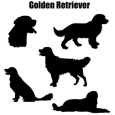 Chien de race Golden Retriever debout, assis, couché en vue de côté - silhouette vecteur isolé Vecteurs
