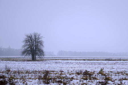 Lonely trees in the snow. Old tree in a field, winter scene Stok Fotoğraf