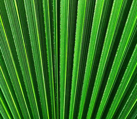 Fan-shaped striped green pattern