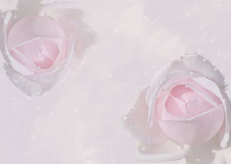 Twinkling delicate pink roses