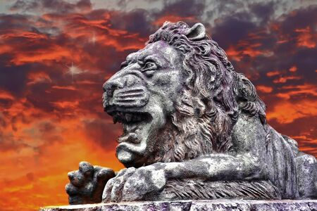 Lion meeting the sunrise
