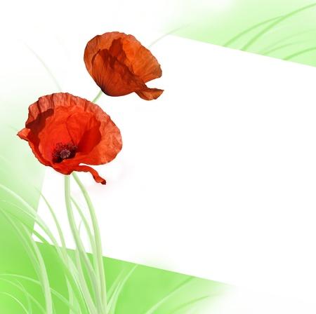 Poppy card Stock Photo