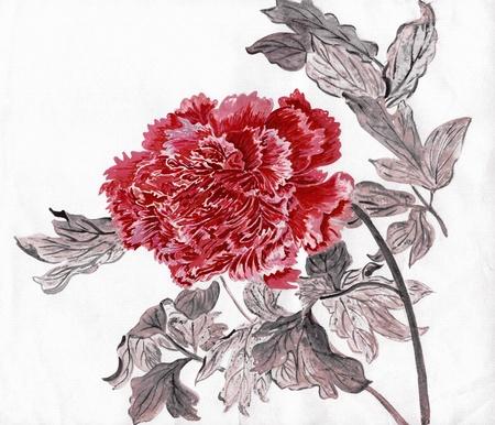 peony black: Illustration of red peony