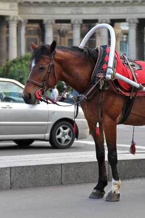 Horse riding in a city