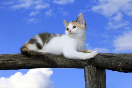 Cute kitten on the old fence Stock Photo
