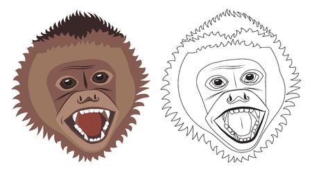 Capuchin smiling Illustration