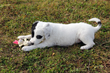 Cute puppy playing with a toy