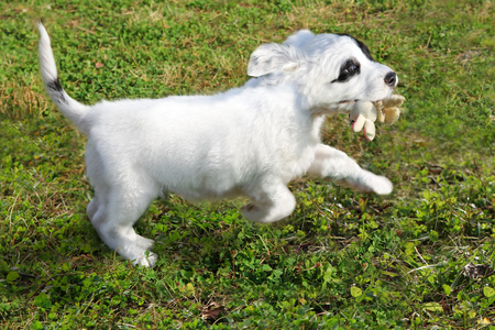 puppy playing Stock Photo