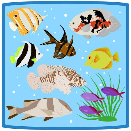 Oceanarium coral tropical fish vector illustration