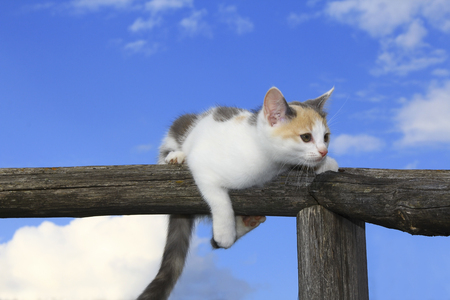 Cute kitten having a rest