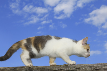 Cute cat walking
