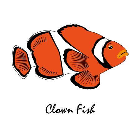Clown Fish Saltwater Aquarium Fish vector illustration