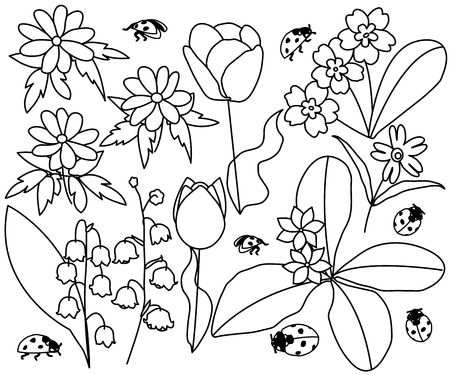 Spring flowers and ladybirds set vector illustration