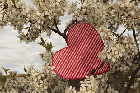 Valentines day background with heart on plum blossom background