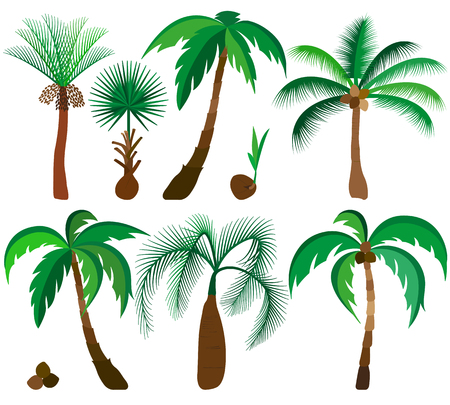Set of palm trees.
