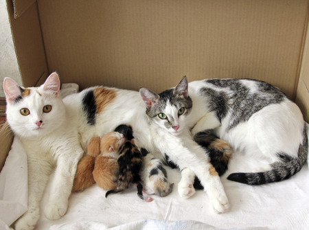 Cat family with new born kittens