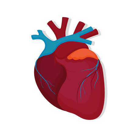 Human heart icon in flat style 矢量图像