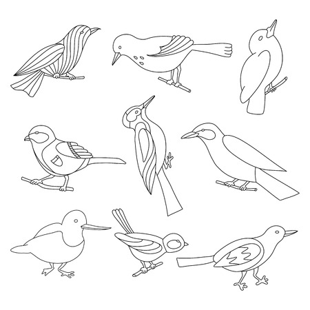 Set of birds for coloring book