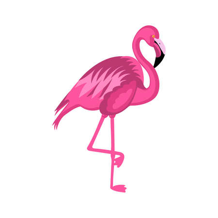 Cute pink flamingo isolated on white background vector illustration