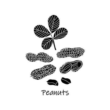 Set of black and white peanuts and its leaves, shells icons