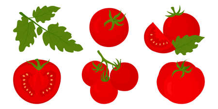 Red tomato set with whole and half tomatoes isolated on white background vector illustration