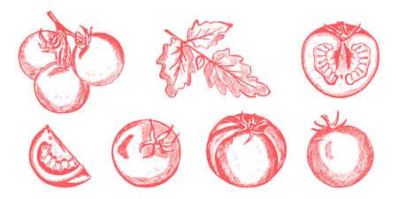 Tomatoes set hand drawn vector illustration