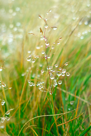dew on the grass. close up drops. water drops. Stock Photo
