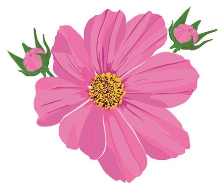 dessin fleur: deux bourgeons roses et fleurs kosmeya Illustration