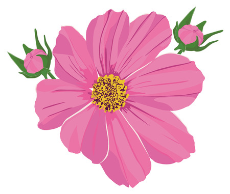 patrones de flores: dos brotes de color rosa y flor kosmeya