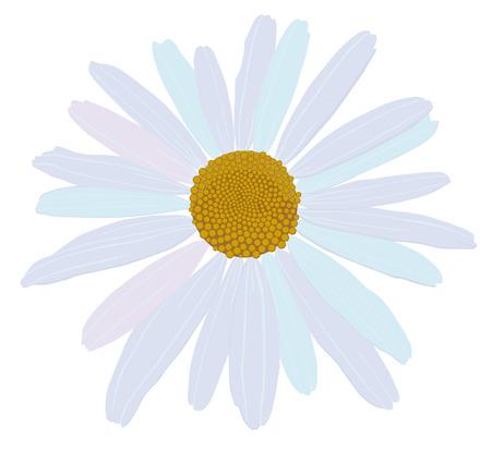 daisyflower: chamomile Illustration