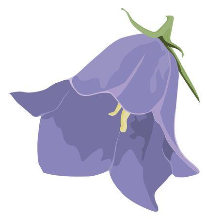 campanula: Bud blue campanula Illustration