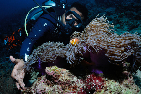 mutualism: A diver is playing with a clownfish, Baa Atoll, Maldives Stock Photo