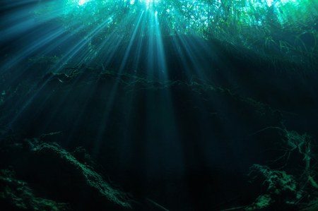 Sunbeams penetrating through the waters of Ponderosa (Garden of Eden) cave with sunken trees in the background, Yucatan peninsula, Mexico