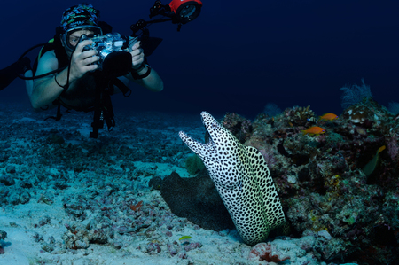 A diver is taking picture of a honeycomb moray eel, North Male Atoll, Maldives