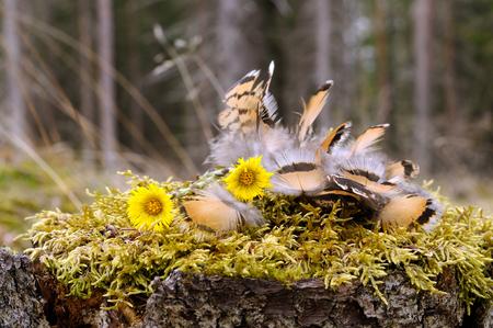 Sowa z piór Piór Partridge leżała na mchu w kształcie ptaka, regionu Puumala, w Finlandii