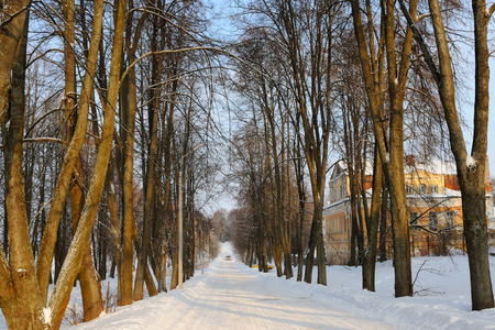 Big trees are growing on both sides of snow covered road, Uglich, Yaroslavl region, Russia