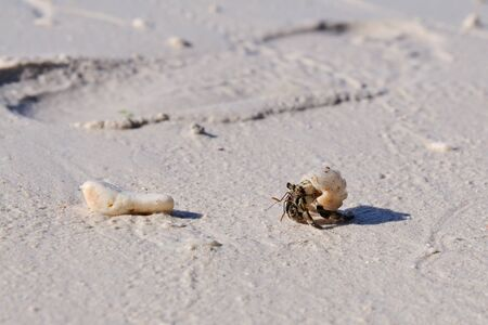 tiny crab is crawling across the beach, a human footprint is on the background, Panglao, Philippines